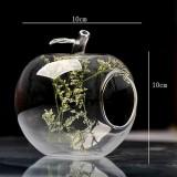 Crystal Hydroponic Plants Terrarium